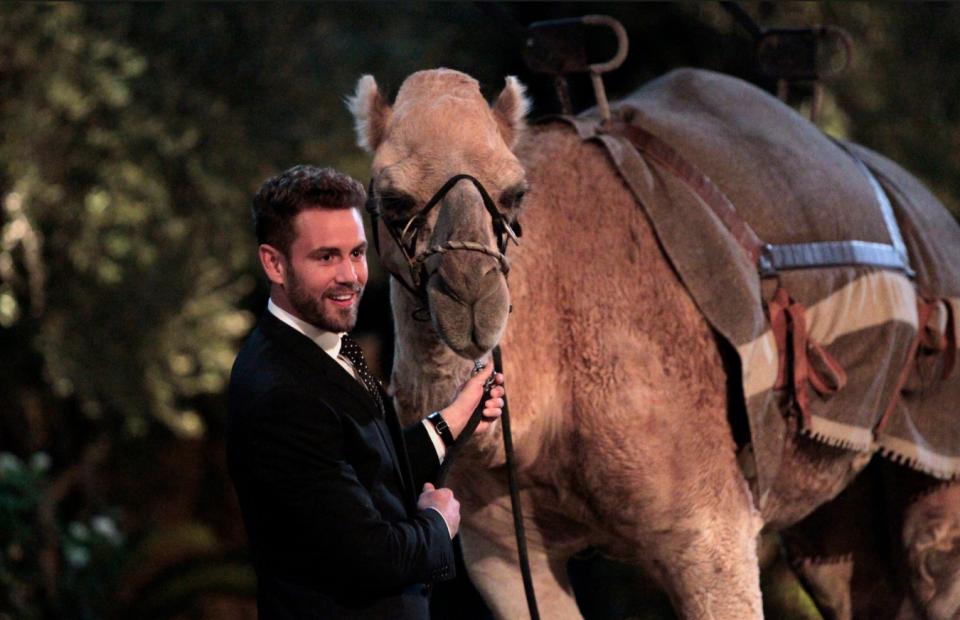 nick-viall-girl-camel